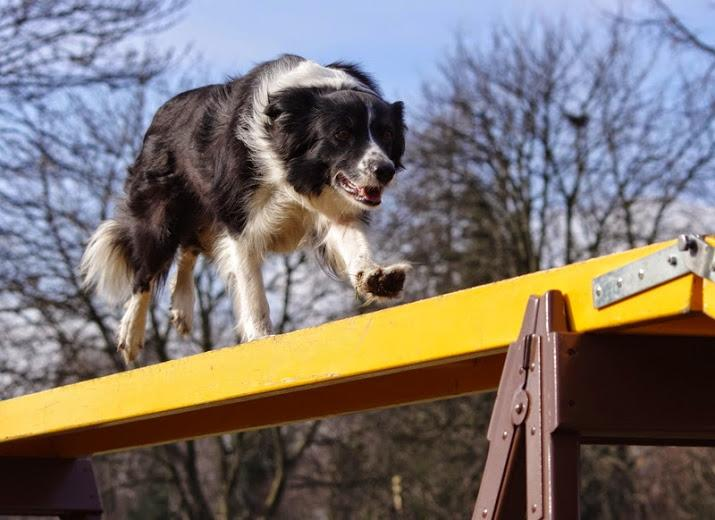 Psy powalczą na Partynicach oZłotą Podkowę